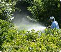 pesticiden