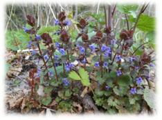 wilde bloemen 3
