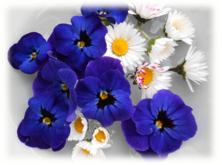 wilde bloemen 4