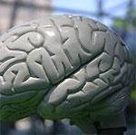 gebruik je hersenen
