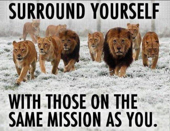 omring jezelf met leeuwen